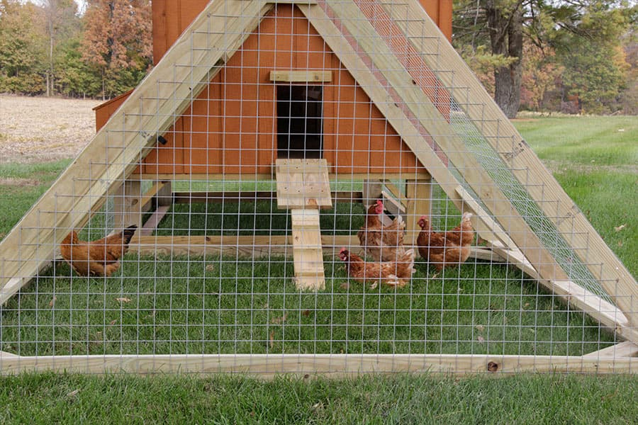 Horse-run-in-shed-and-chicken-coop-designs-in-ky